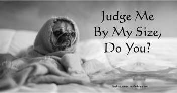 Judge Me By My Size Do You - Yoda